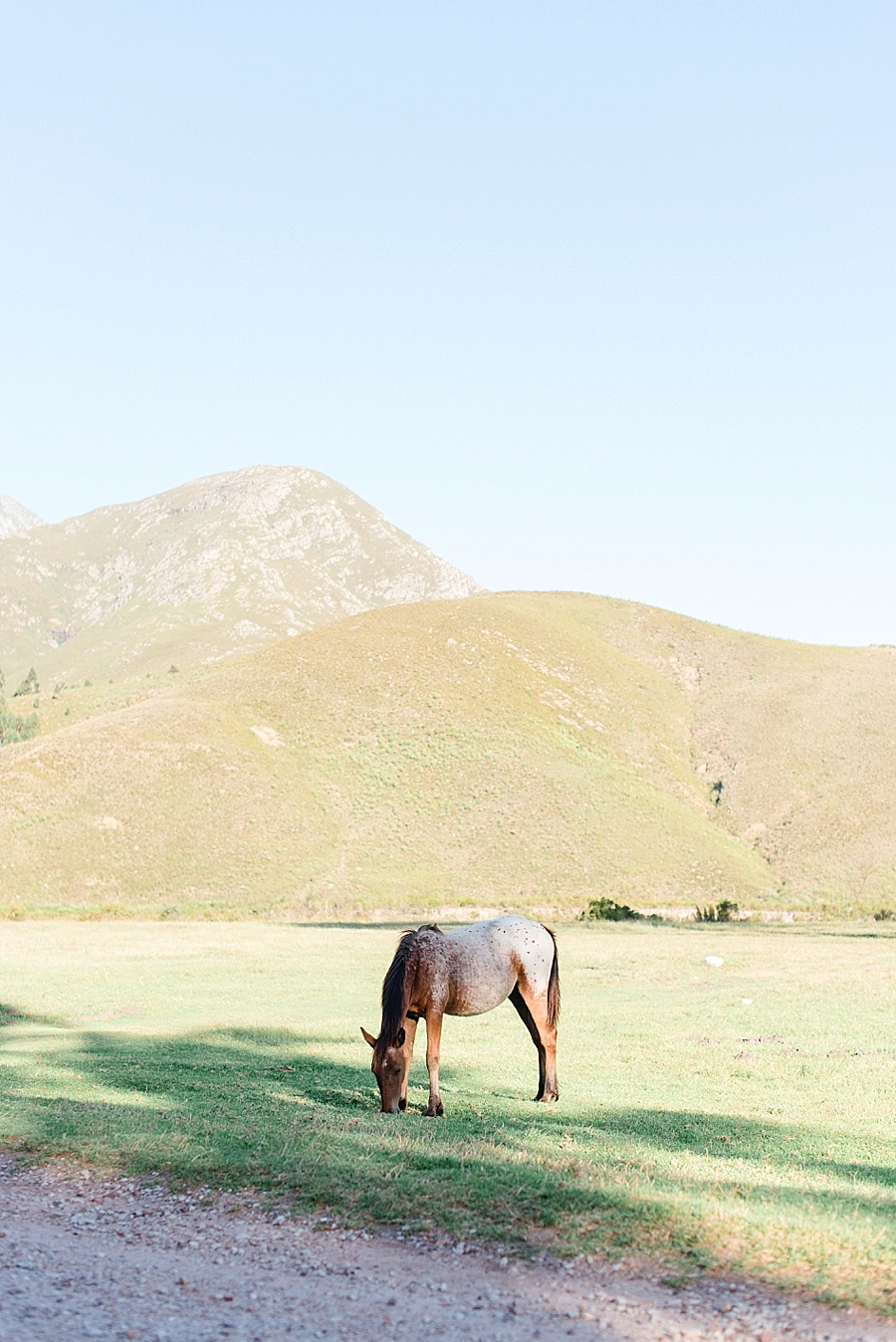 Darren Bester - Cape Town Photographer - Greyton - Searles - Heidi + Bruno_0001.jpg