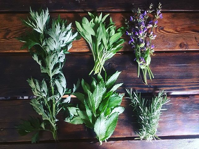 Farm vibes tonight.  Some fresh herbs gathered for a little evening tea. 🍵 ⠀⠀⠀⠀⠀⠀⠀⠀⠀⠀⠀⠀ ⠀⠀⠀⠀⠀⠀⠀⠀⠀⠀⠀⠀ Mugwort - digestive and joint support, apparently enhances lucid dreaming 😬 . Sage (+flowers) - brain and hormone support 🚺⠀⠀⠀⠀⠀⠀⠀⠀⠀⠀⠀⠀ . Rosemary - digestion and memory support 🧠 . Mint - digestion support and stress reducer 🌿. . . . . #thisisthelife #herbnerd #farmvibes #dogsitter #herbalteayesplease