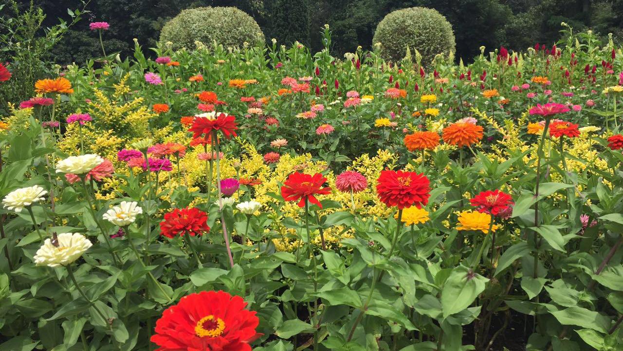 The Flower Farm -
