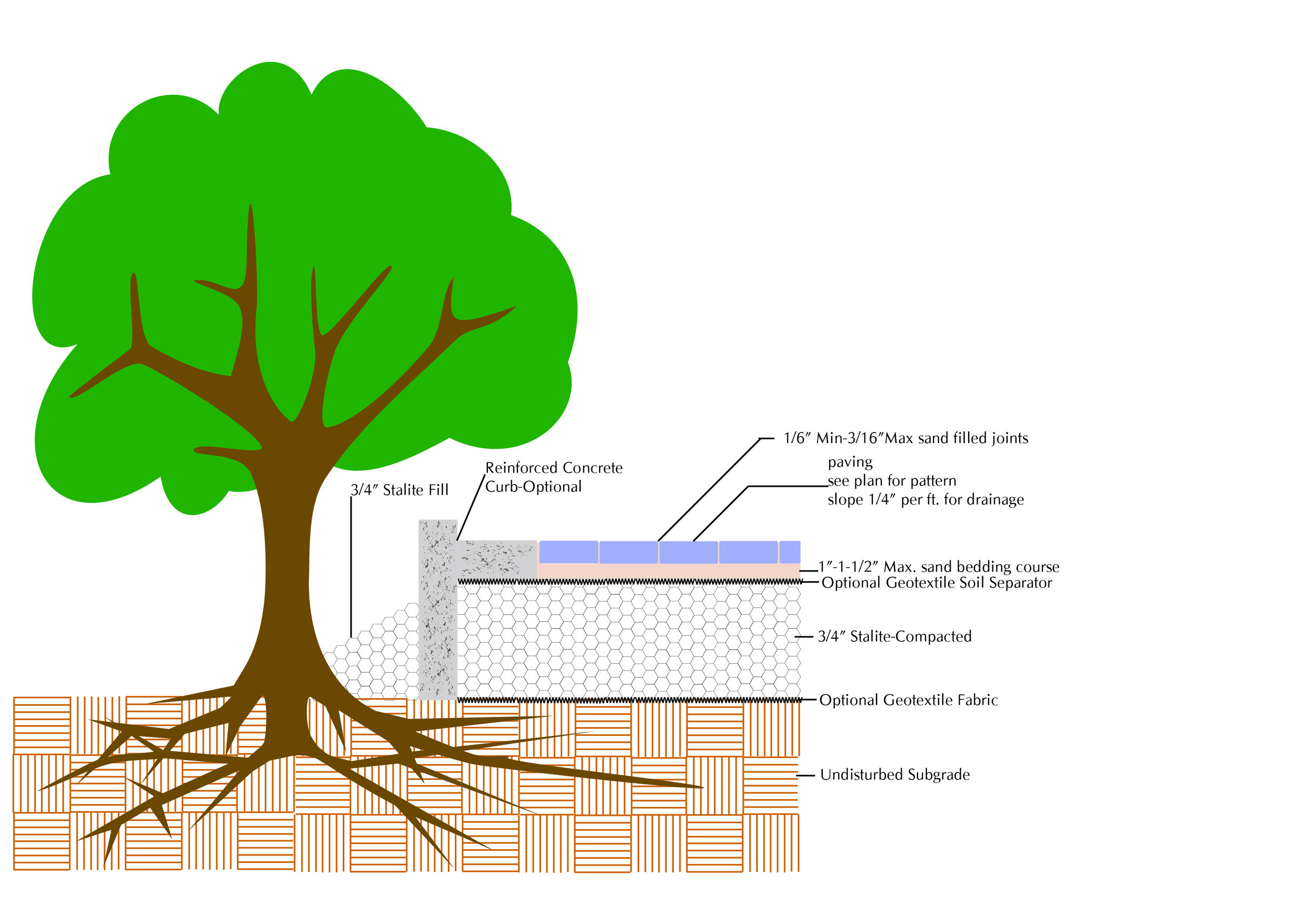 Structural Bridging over Tree Roots.jpg