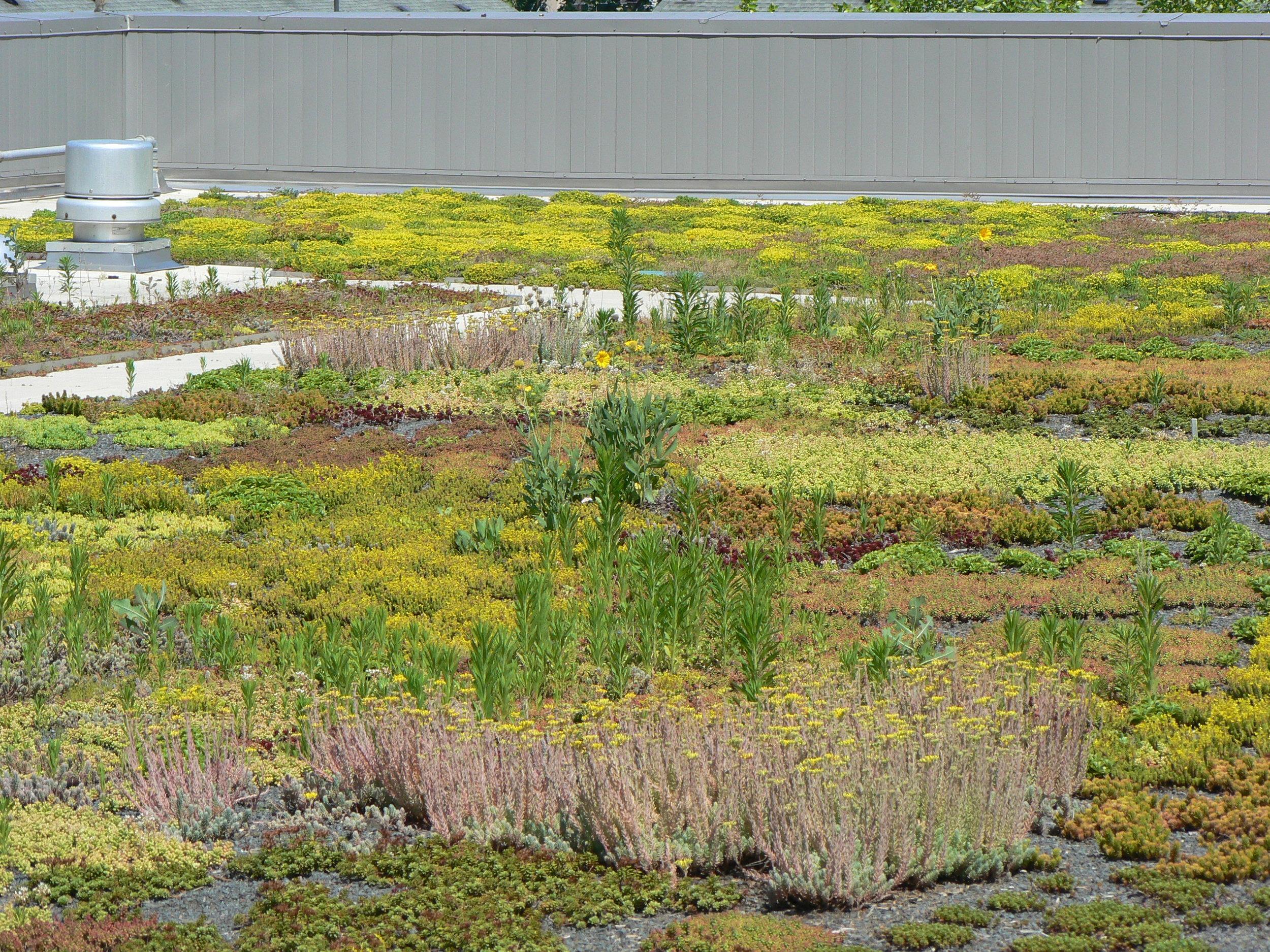 17 Extensive Green Roof .JPG