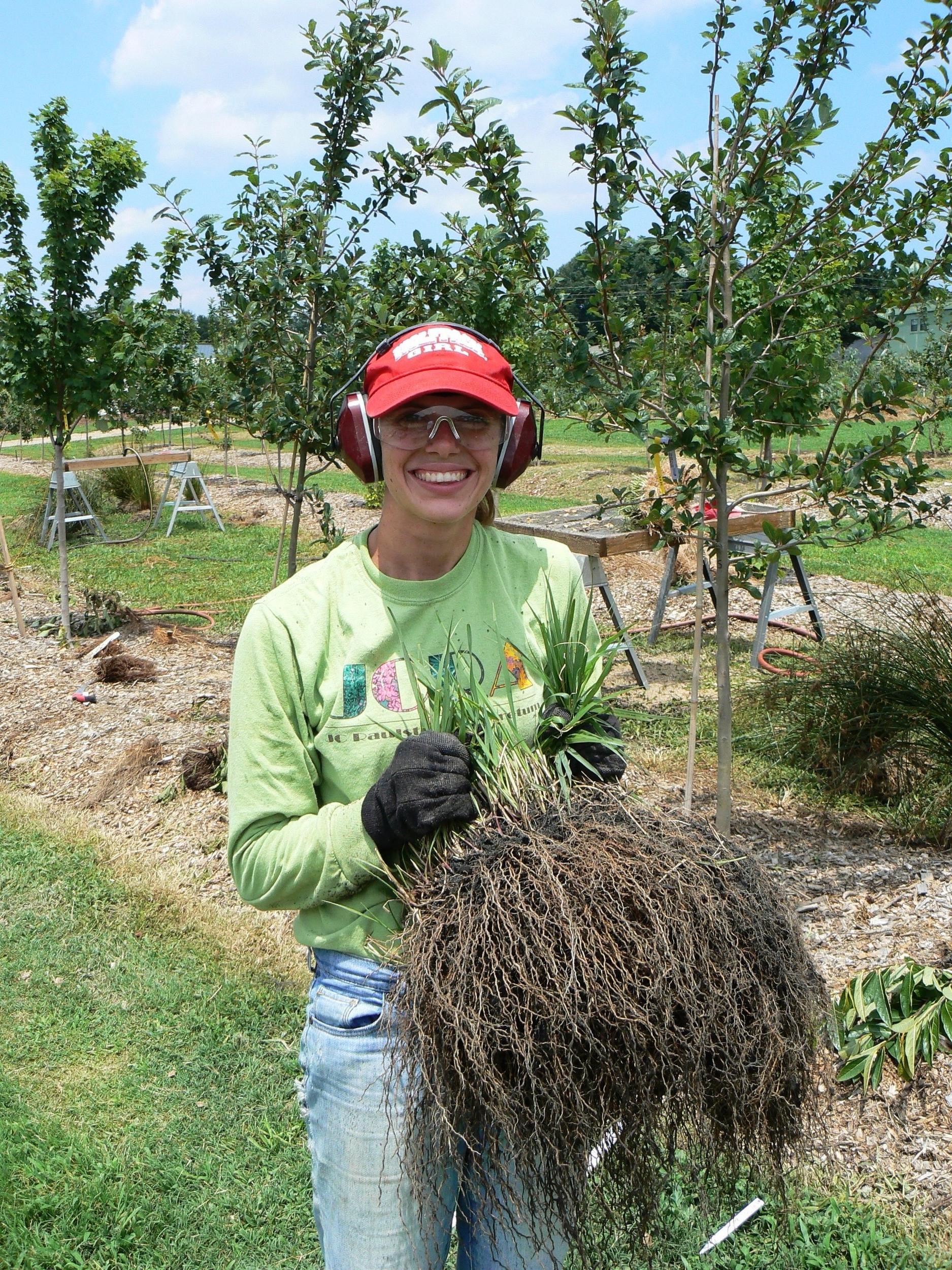 25  Rebecca Pledger holding panicum virgatum ncsu rain garden July 2012.jpg