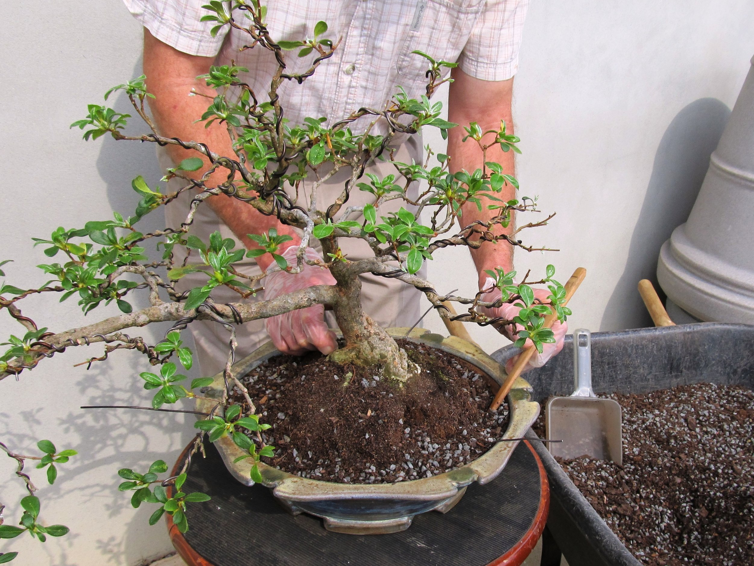 6 Bonsai photo for banner.jpg