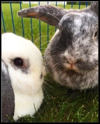 Darla (left) and Oliver - BFFs for life