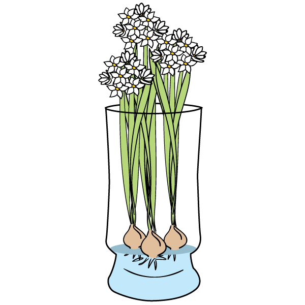 Paperwhites Care & FAQ