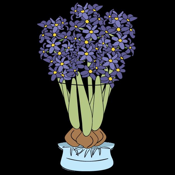 Copy of Hyacinths Care & FAQ