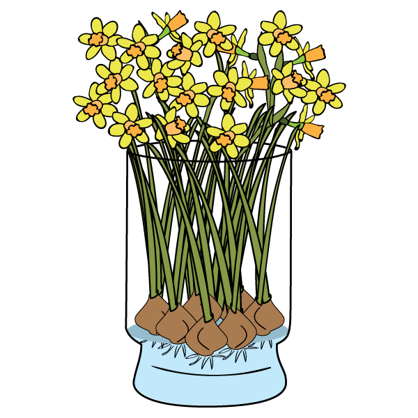 Daffodils Care & FAQ