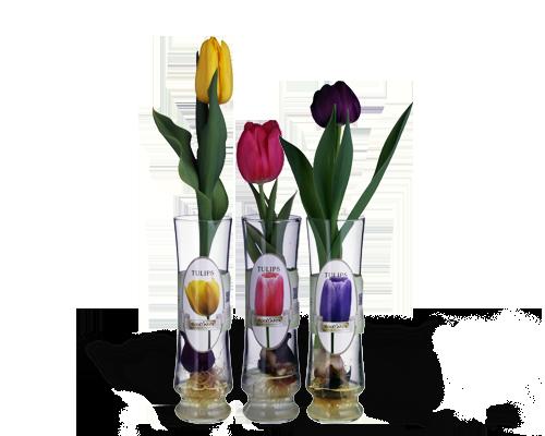 Versailles Vase   1 Bulb