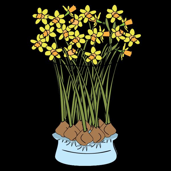 Daffodils-FAQ.png