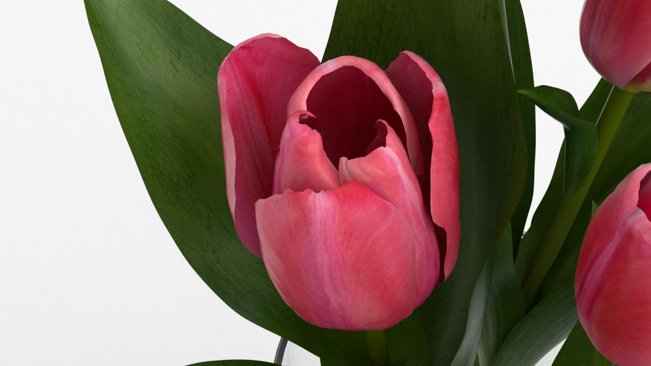 Tulip_CU_rgb0530.png