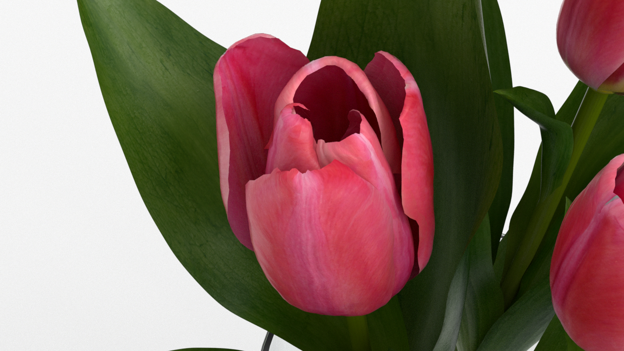 Tulip_CU_rgb0520.png
