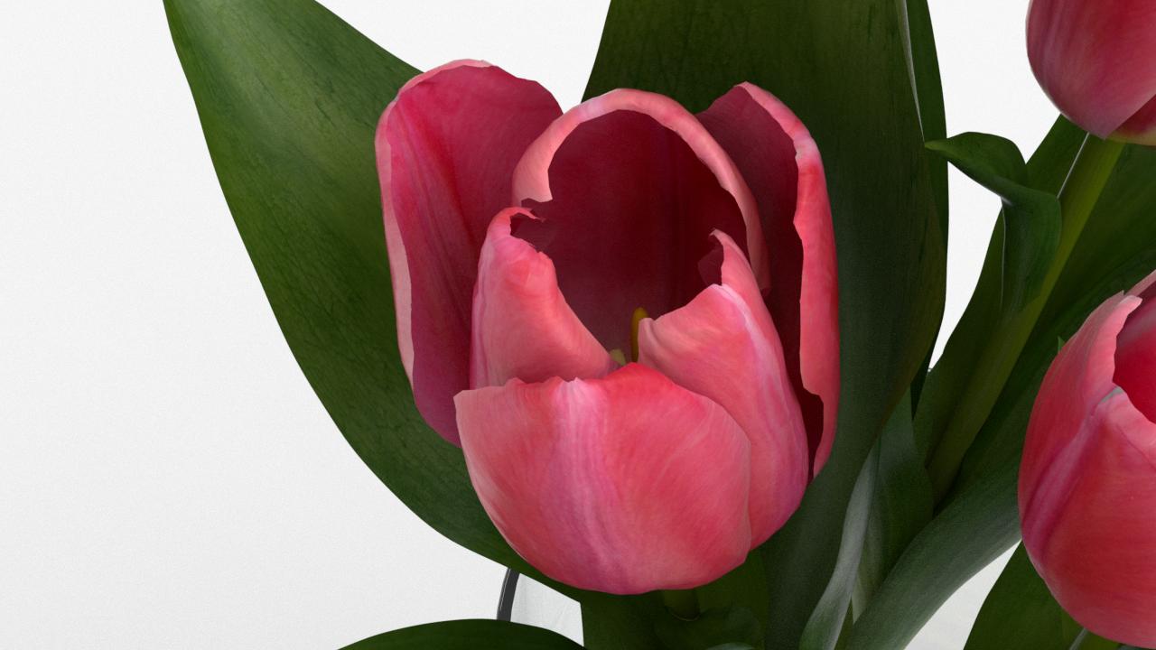 Tulip_CU_rgb0550.png