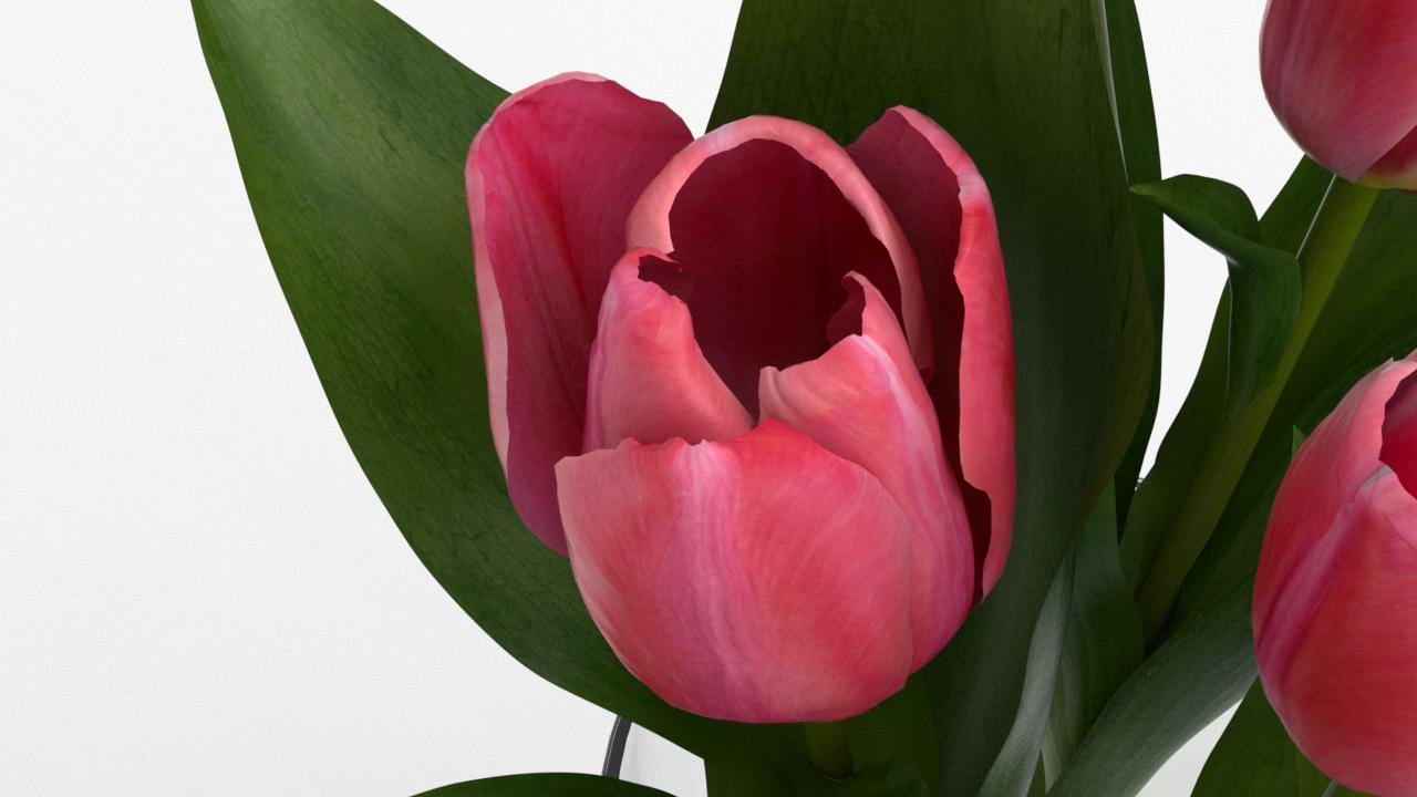 Tulip_CU_rgb0540.png