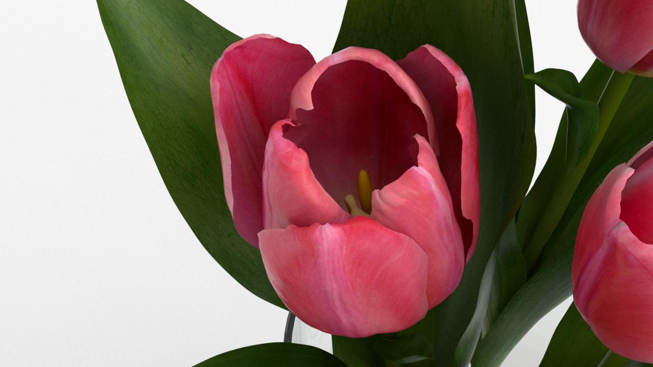 Tulip_CU_rgb0560.png