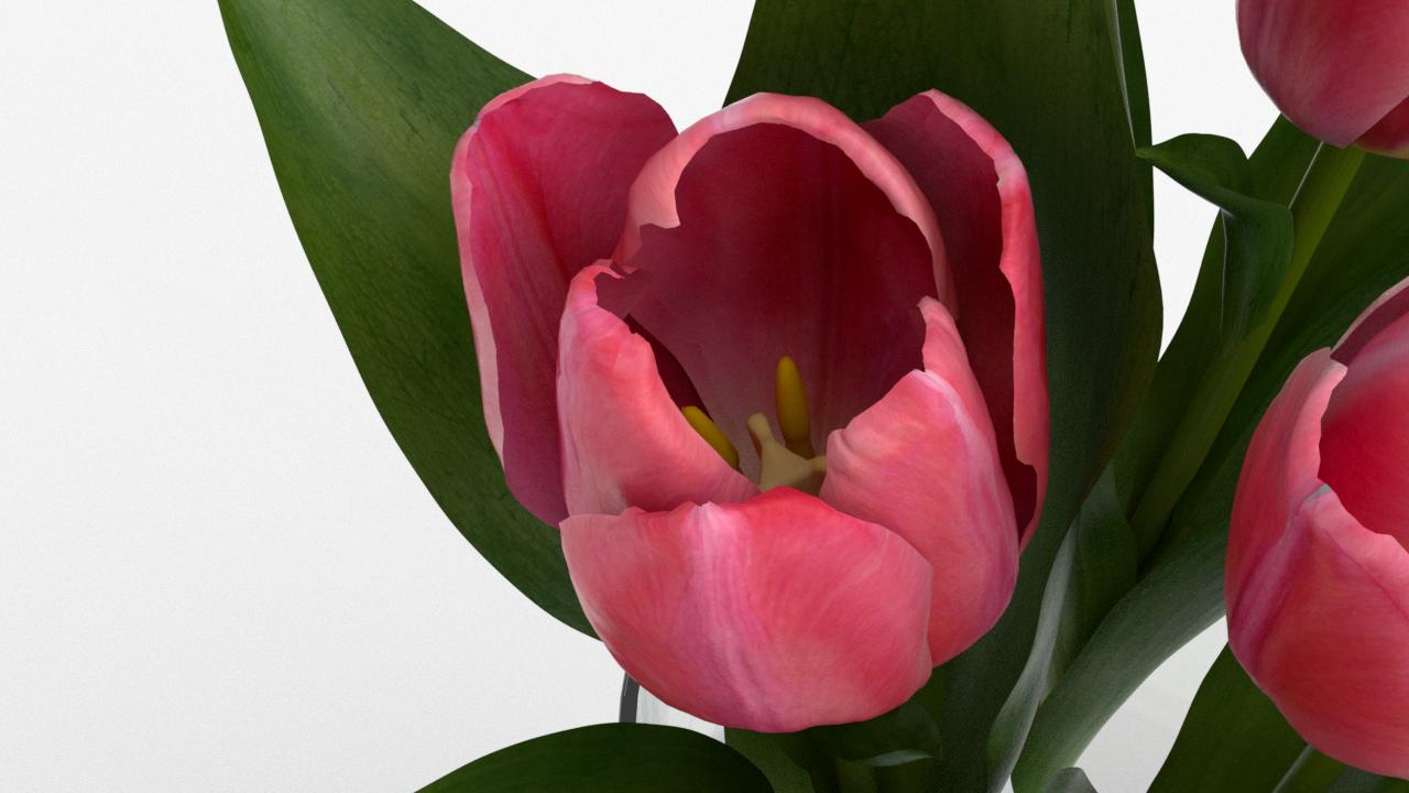 Tulip_CU_rgb0570.png