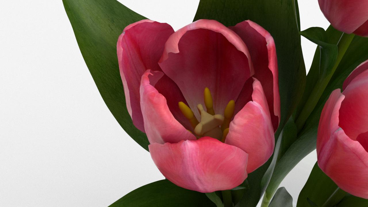 Tulip_CU_rgb0590.png
