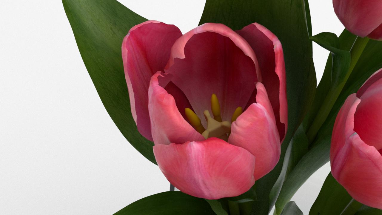 Tulip_CU_rgb0580.png