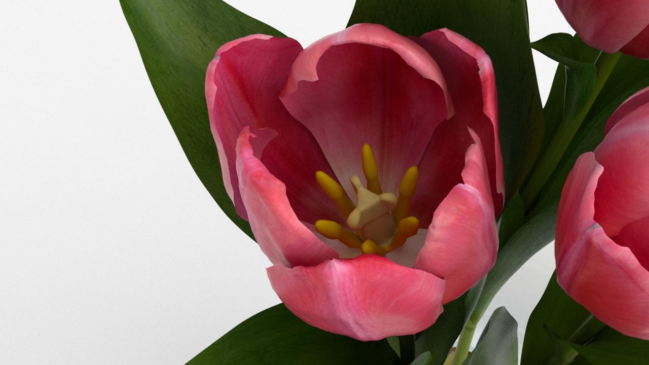 Tulip_CU_rgb0610.png