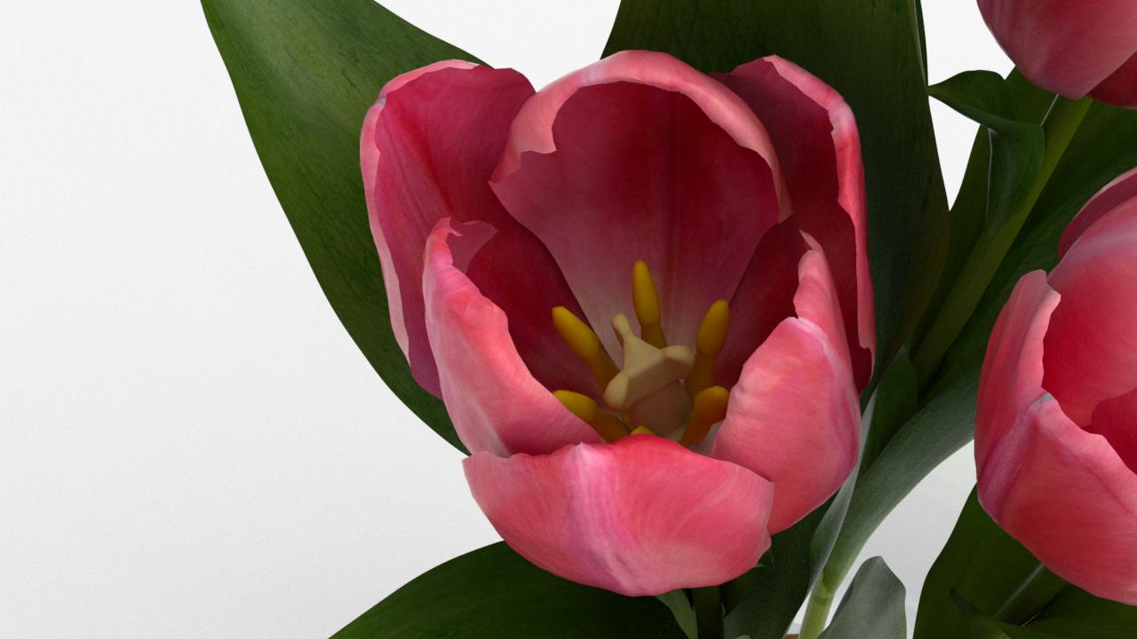 Tulip_CU_rgb0600.png