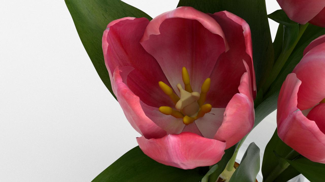 Tulip_CU_rgb0630.png