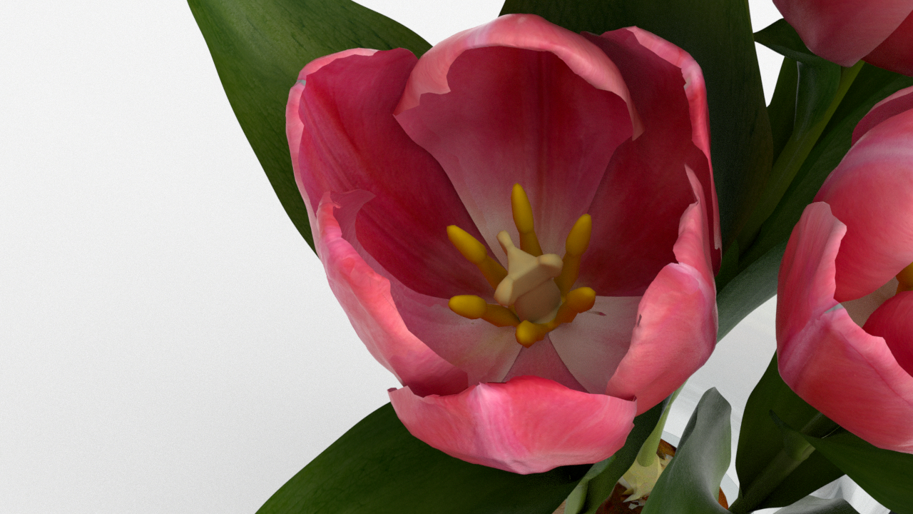 Tulip_CU_rgb0640.png