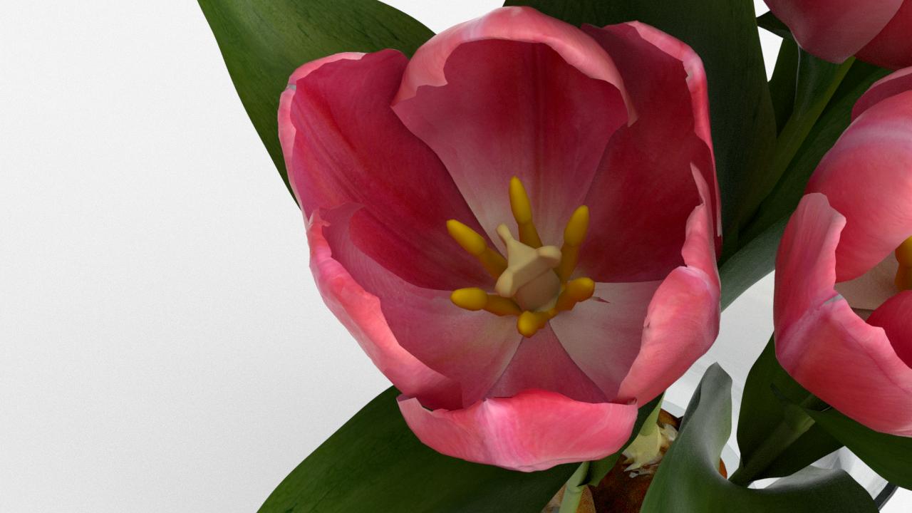 Tulip_CU_rgb0660.png