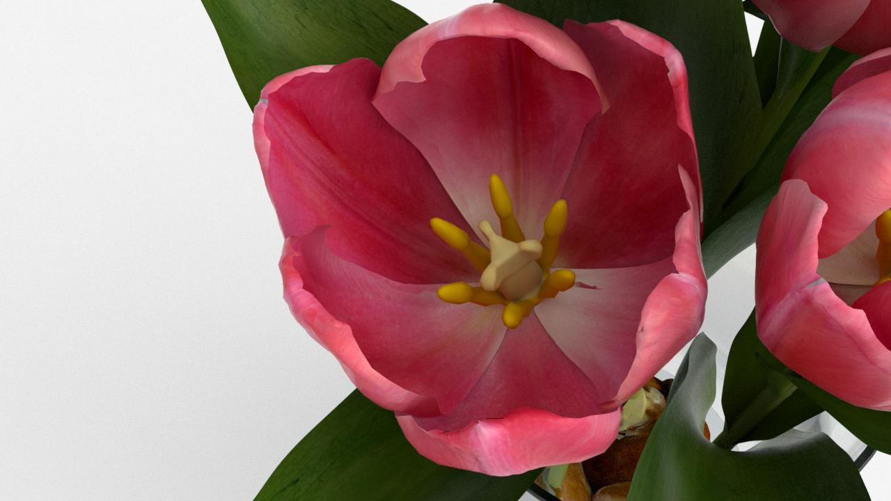 Tulip_CU_rgb0690.png