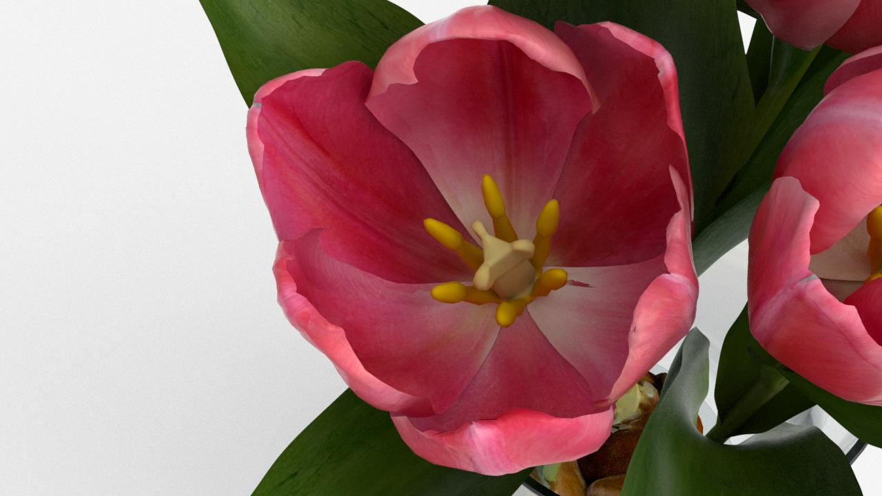 Tulip_CU_rgb0699.png