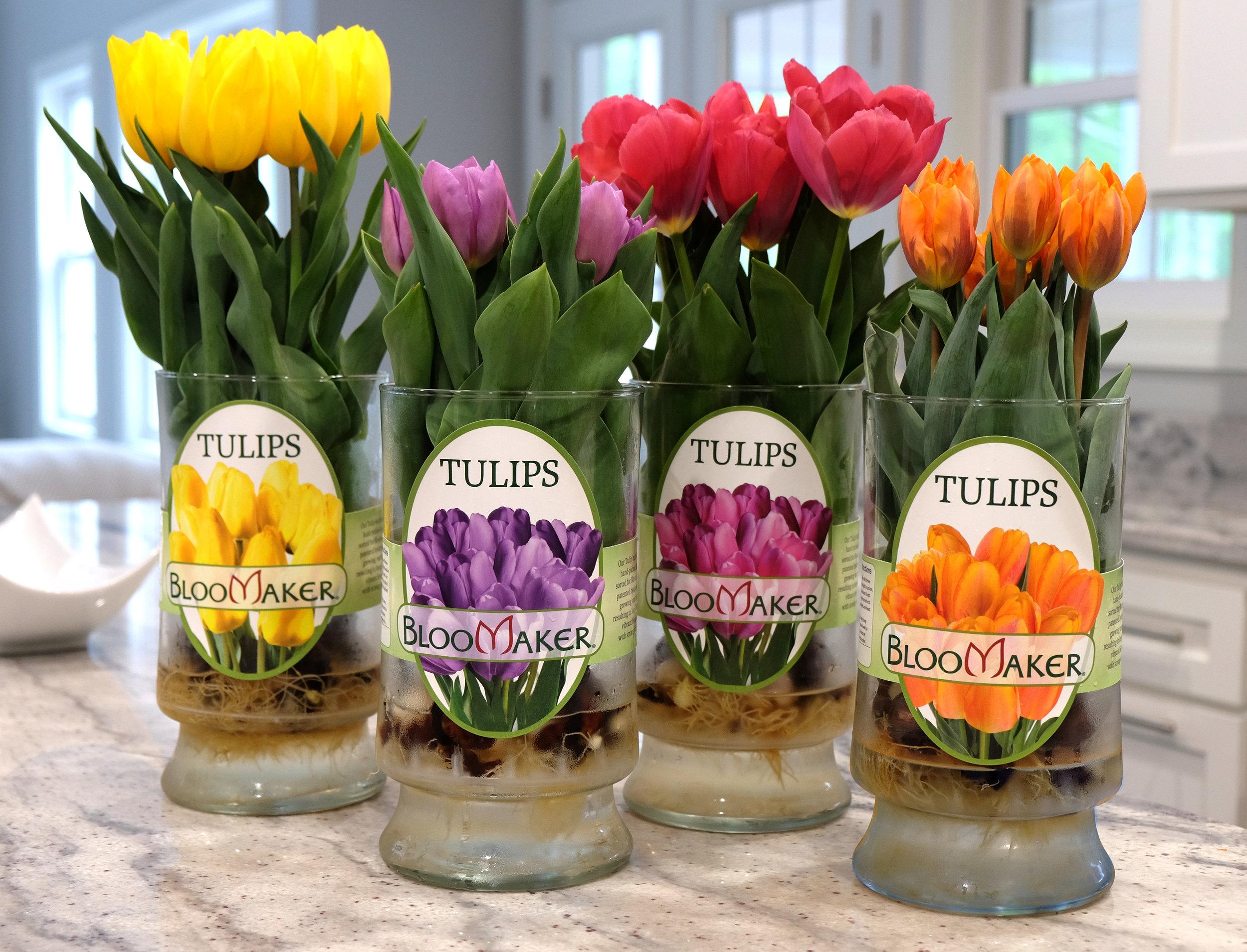 Bloomaker_Tulips.jpg