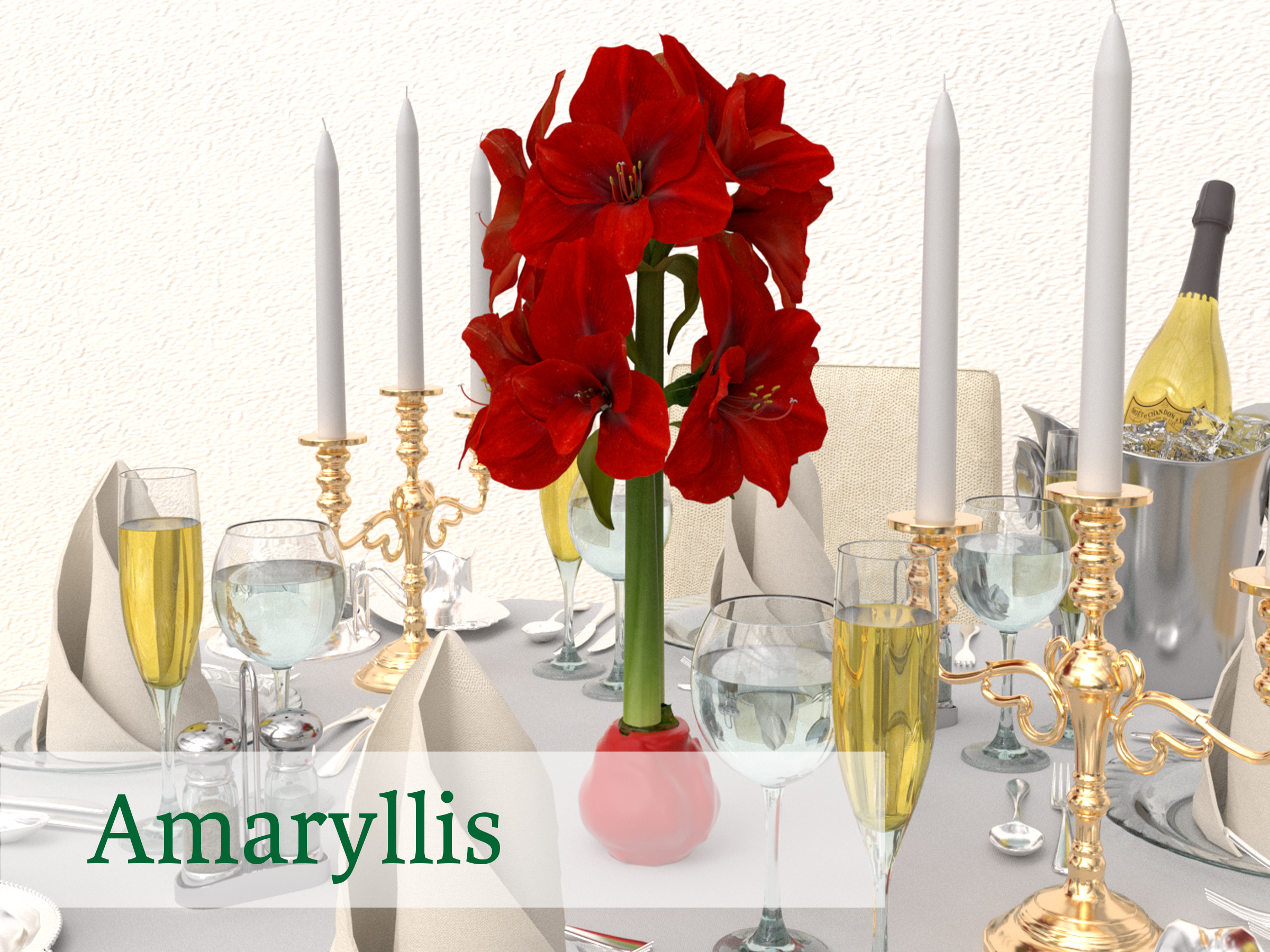 Bloomaker Amaryllis Amaryllis_Red_Wax0113.jpg