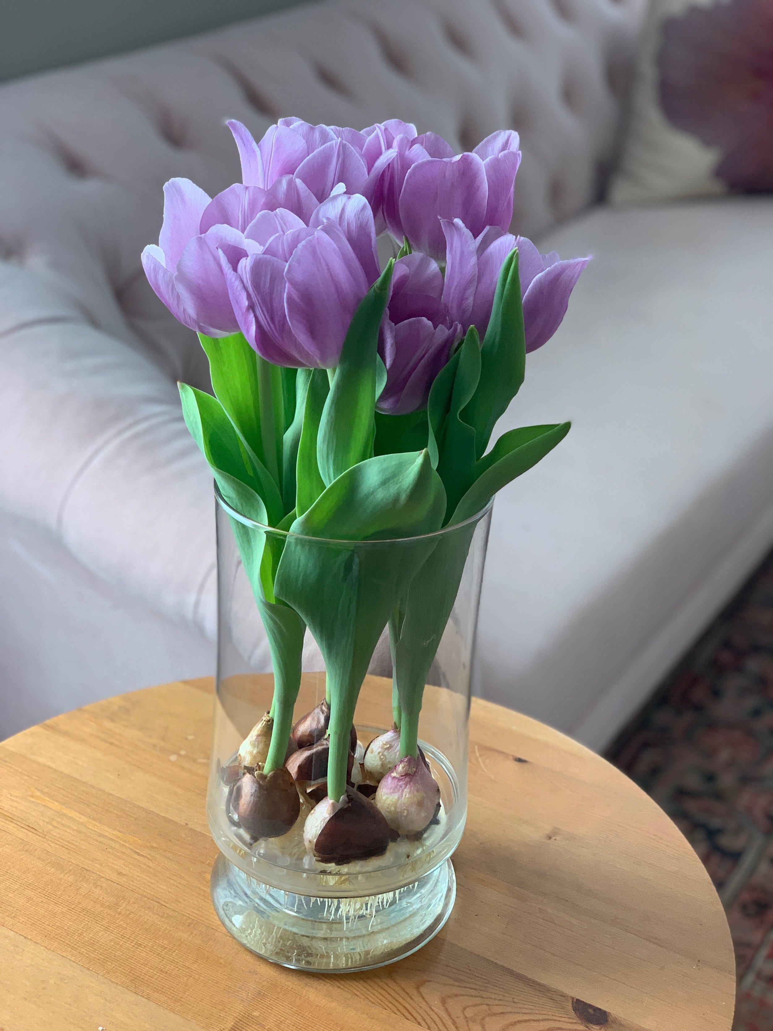 Bloomaker Tulips IMG_0295.jpg
