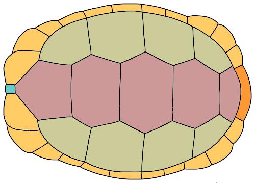 tortoise_shell.jpg