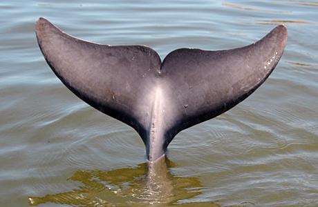 dolphin_tail.jpg