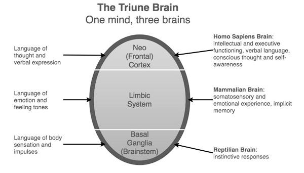 triune_brain.jpg