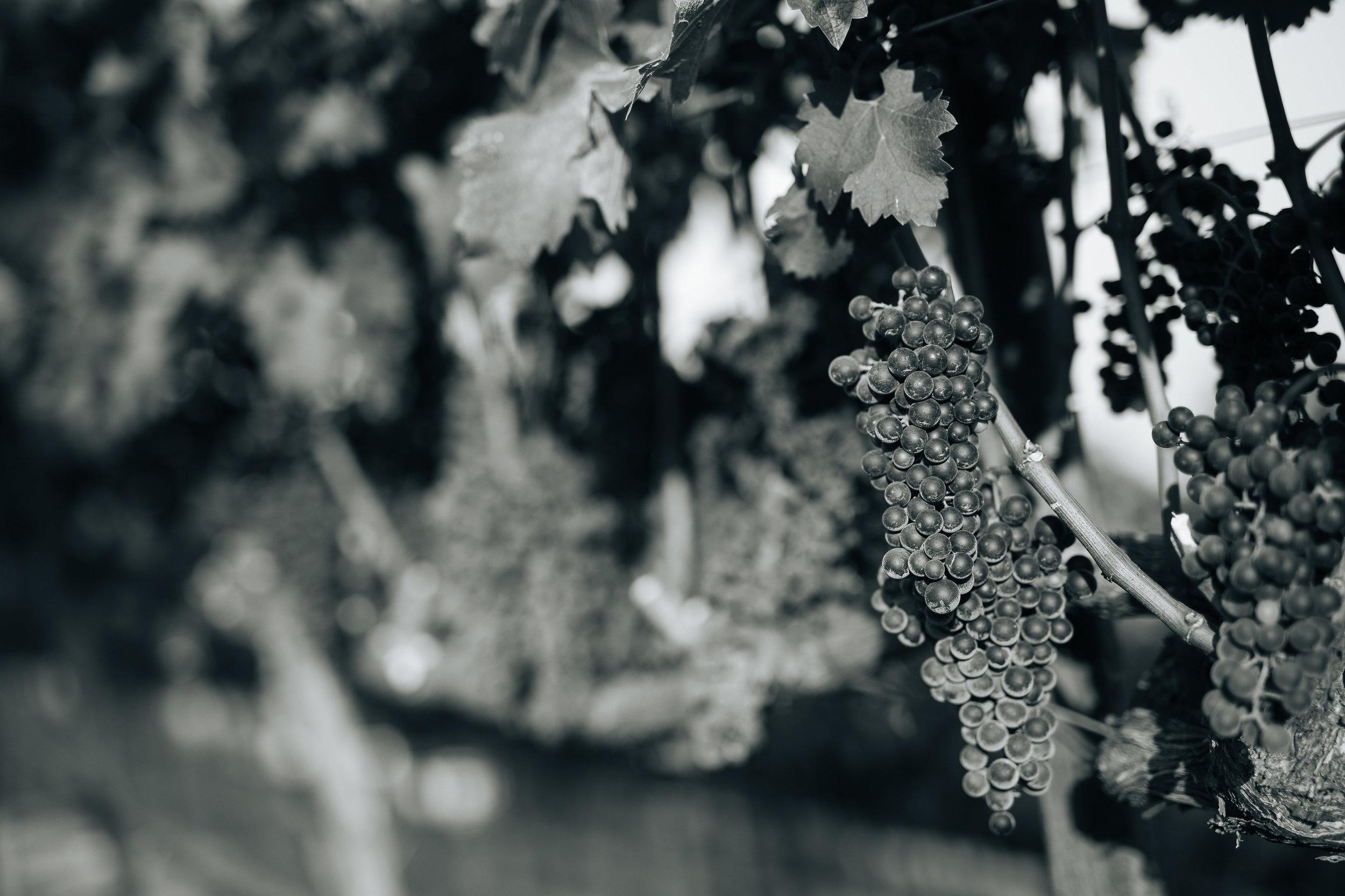 Mount Veeder vineyard.jpg
