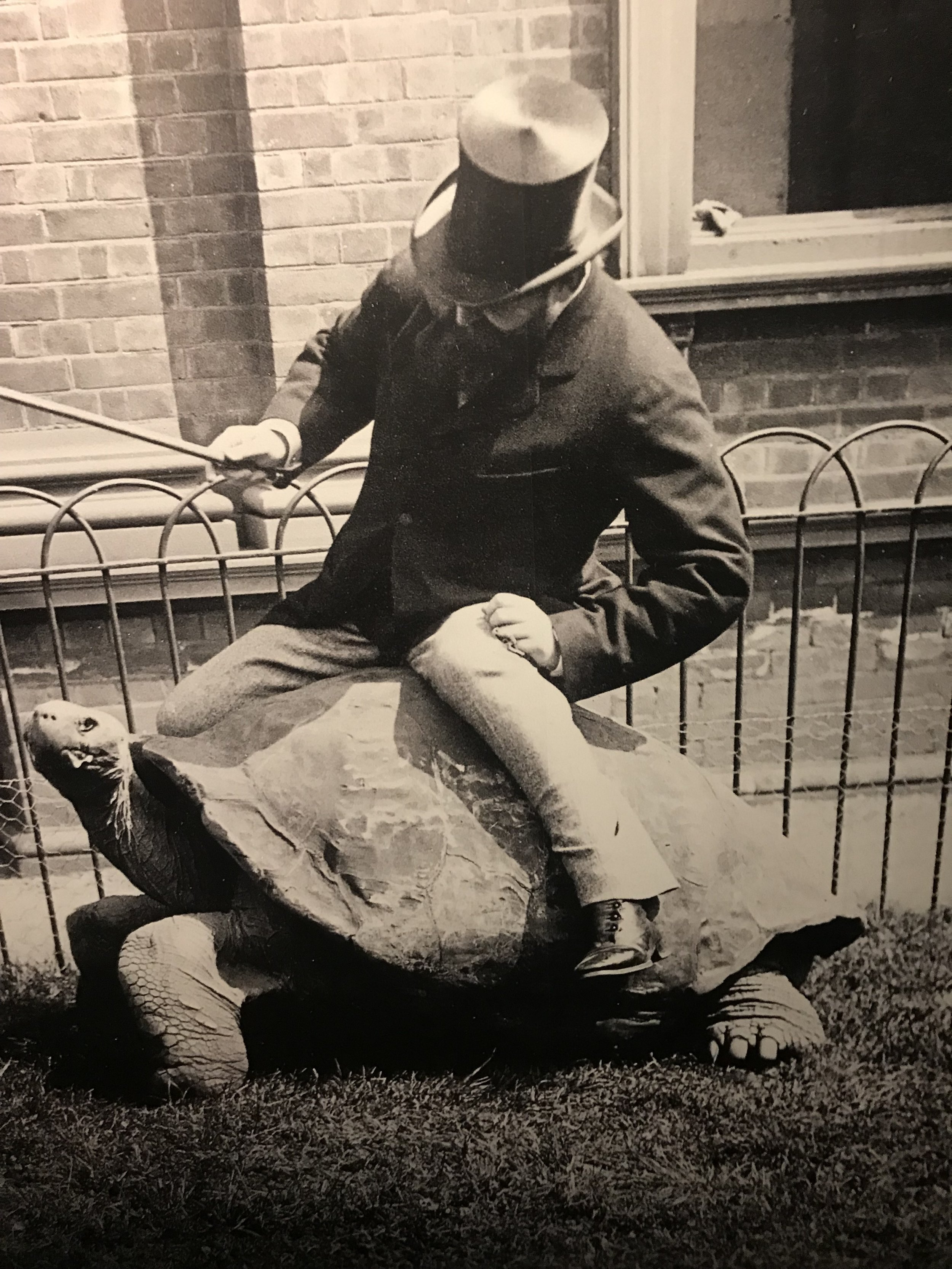 Walter Rothschild riding a turtle. Although I'm sure he made important contributions to zoology, it's hard not to hate him for torturing this turtle.