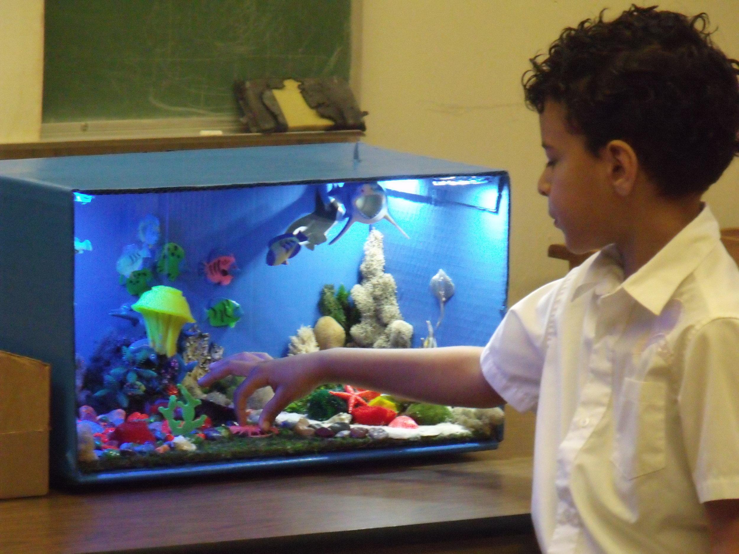 Ecosystems in Real Life - Kindergarten
