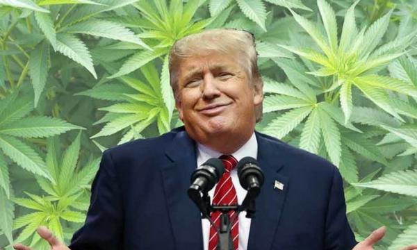HiFi Farms Politics Trump