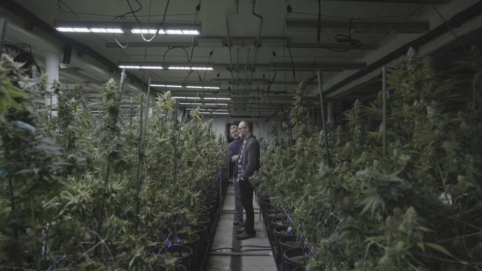 Lee Henderson (front) and Richard Vinal, two of four original co-founders of HiFi Farms in Hillsboro, Oregon, survey the winter crop at one of HiFi Farms' indoor grow rooms. In winter, the plants are kept to a strict schedule of 12 hours under the grow light followed by 12 hours in the dark to simulate the summer growing season.