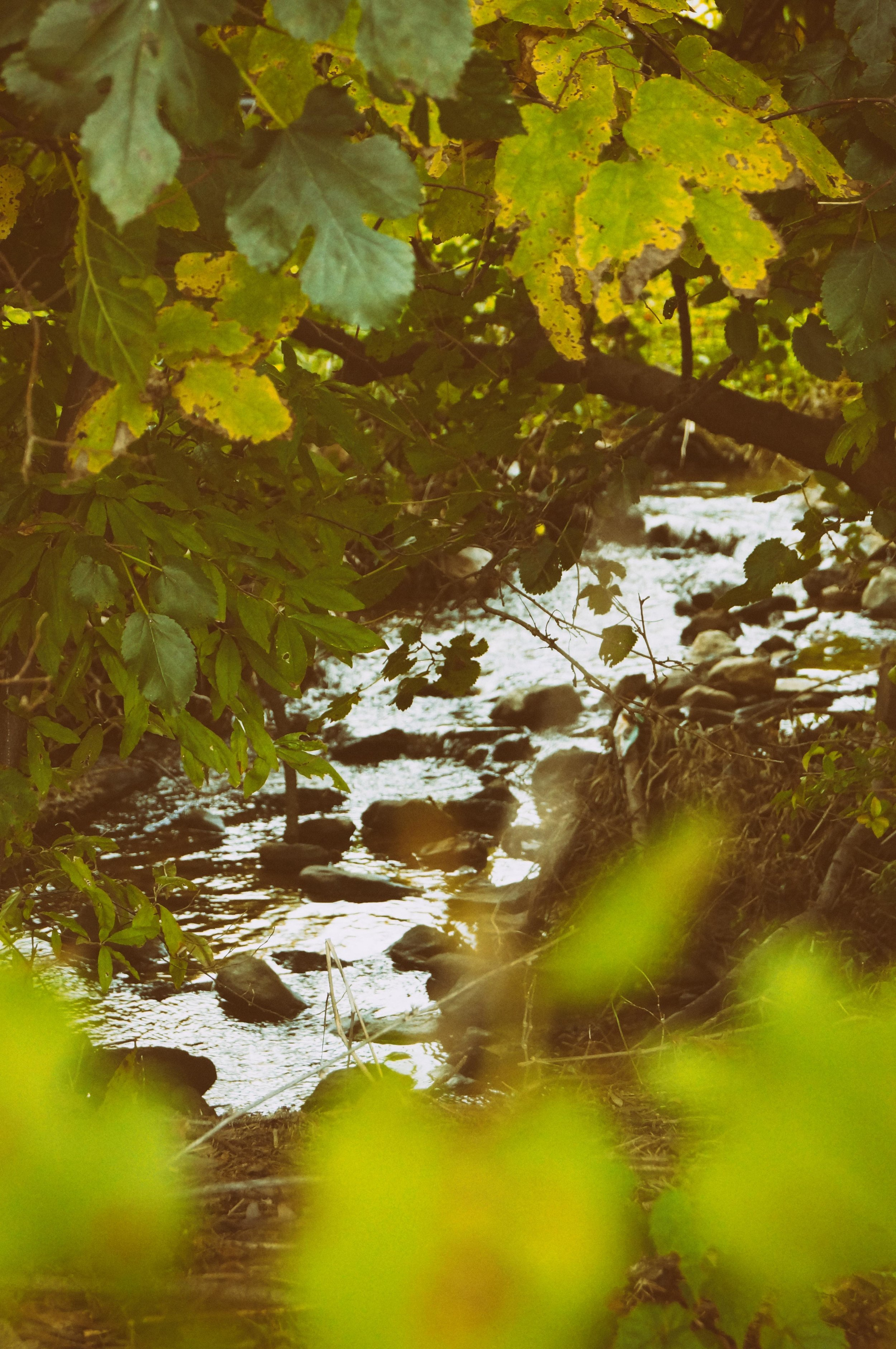 In the Green Series-- Halcyon Stream1D.jpg