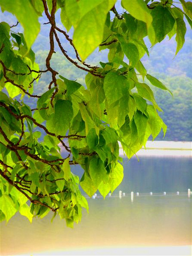 leaves lake and sand in green from flickr.jpg