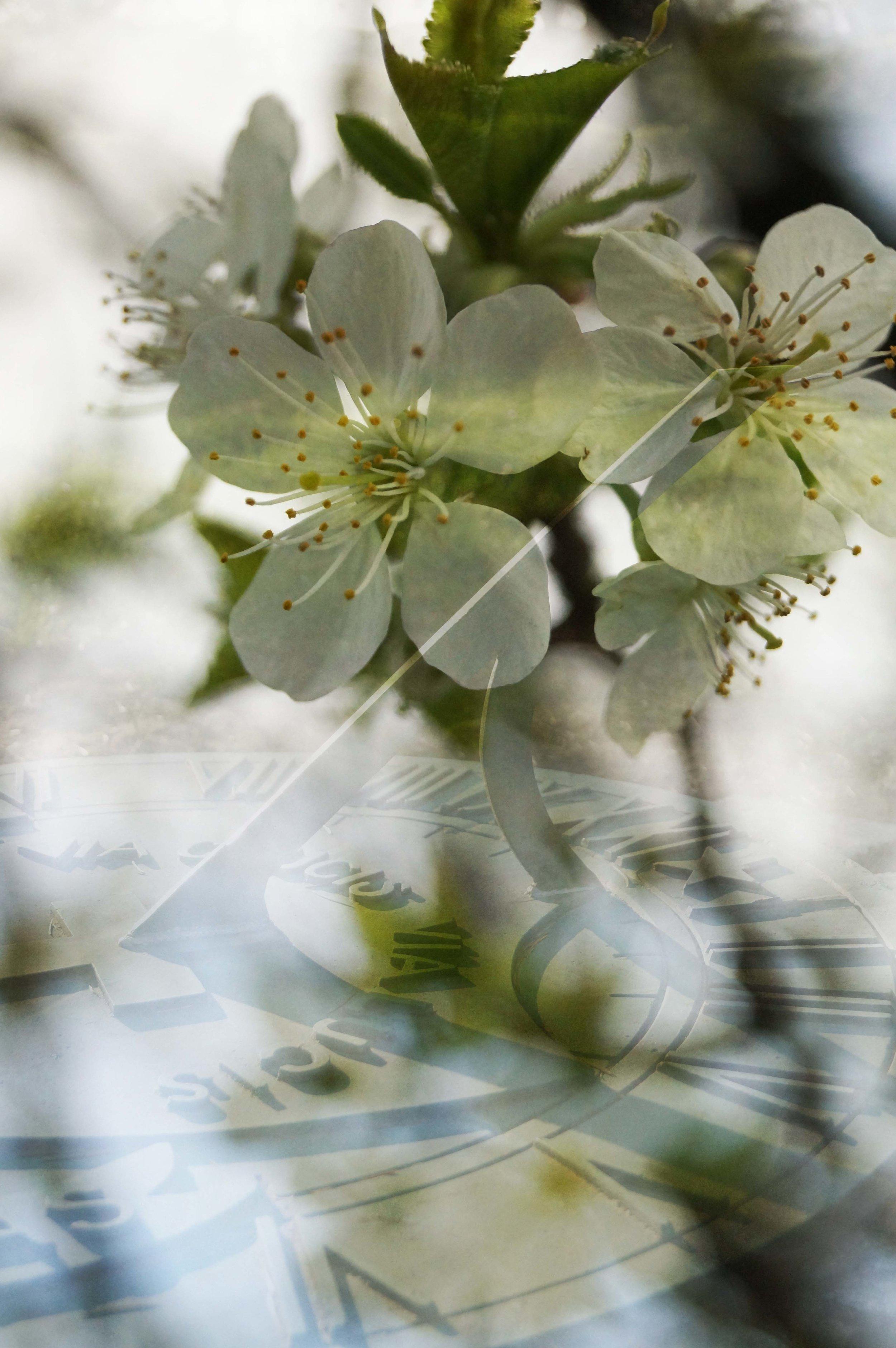 Moment_Series--Blossom_Time_4P.jpg
