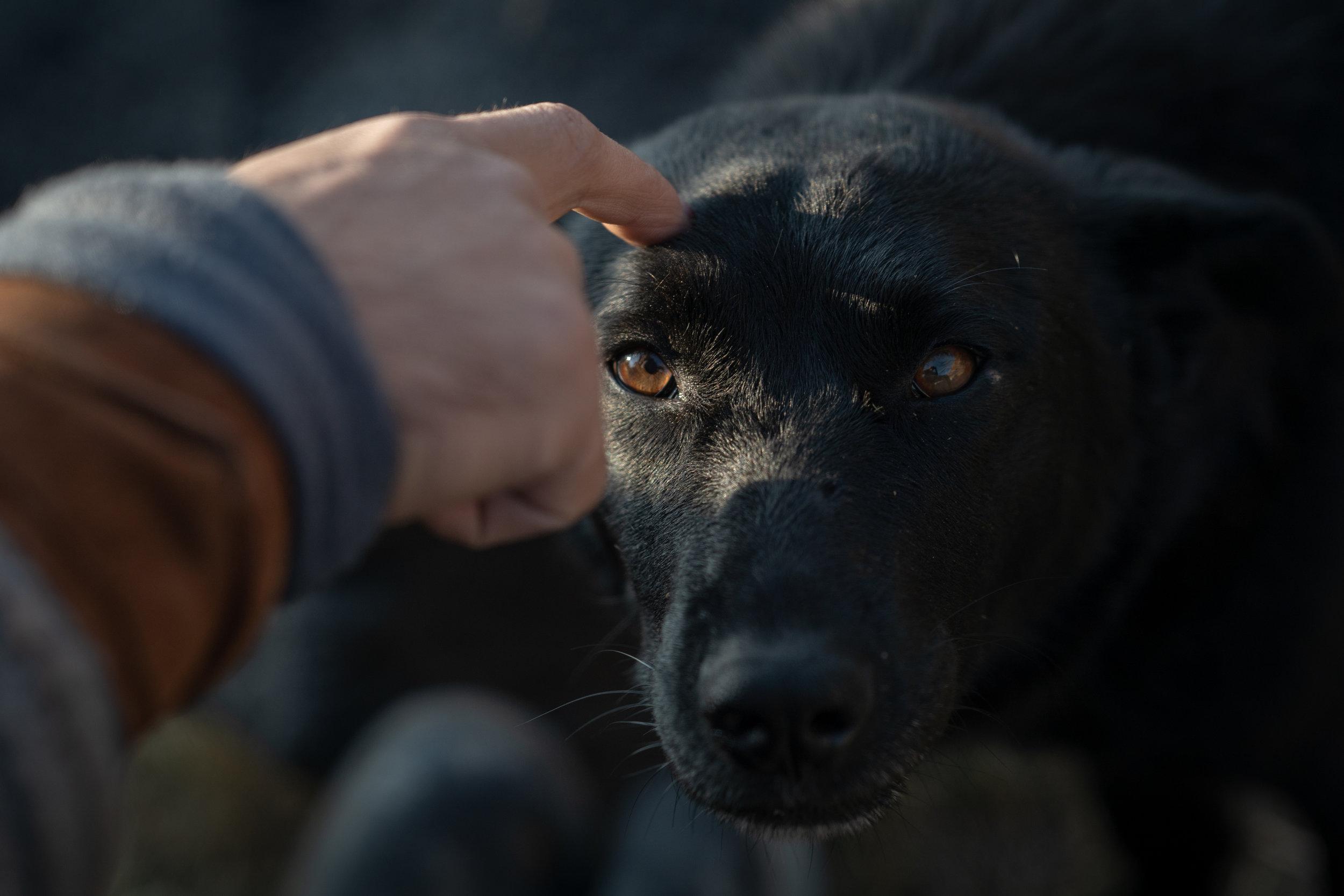 Armenian Puppy
