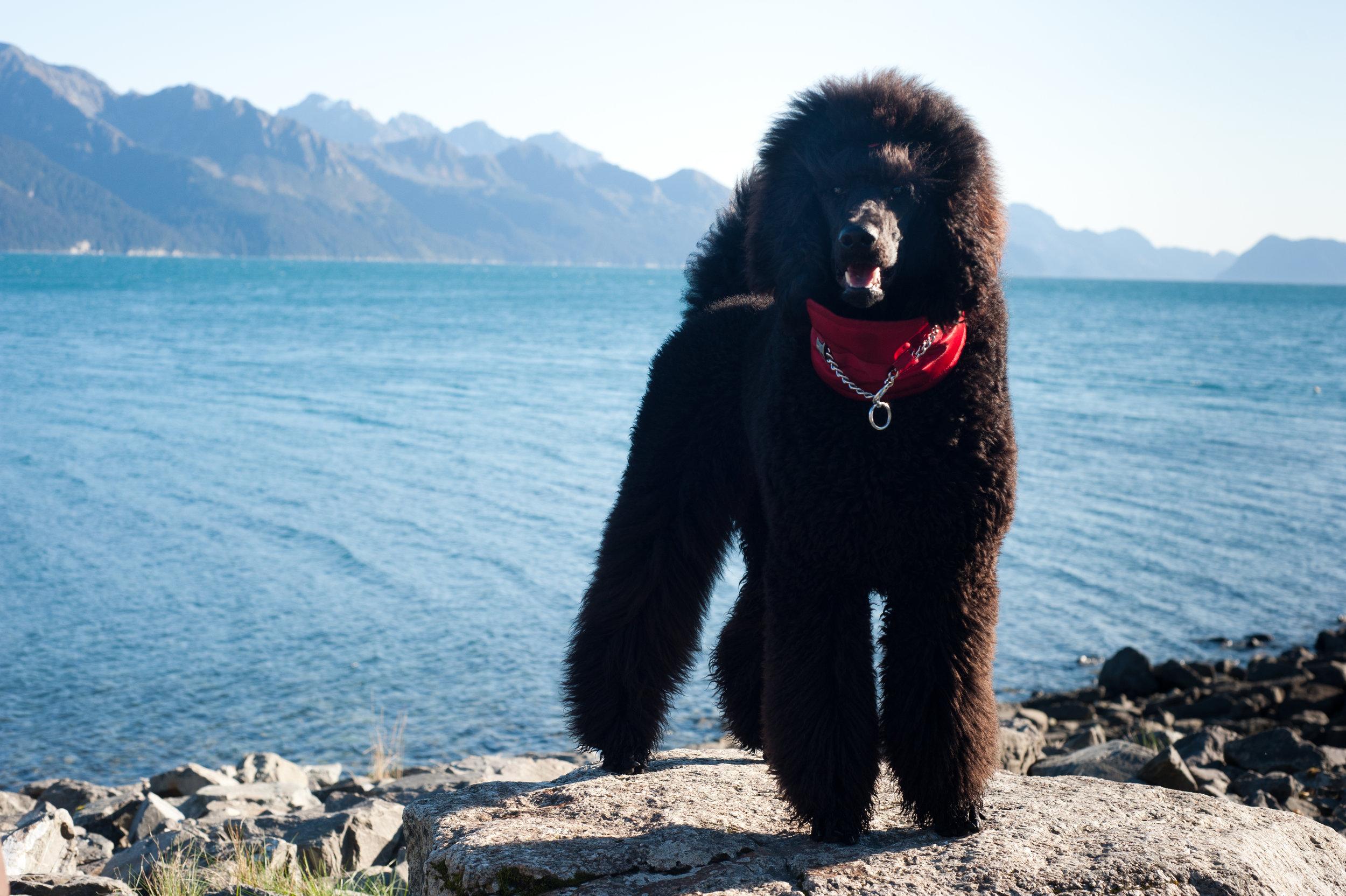 Wallace as a puppy in Seward, Alaska