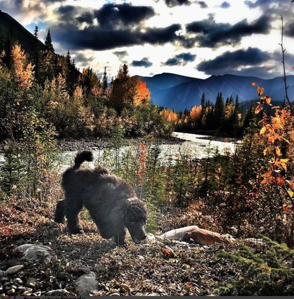 Kluane exploring the Yukon Territory in Canada