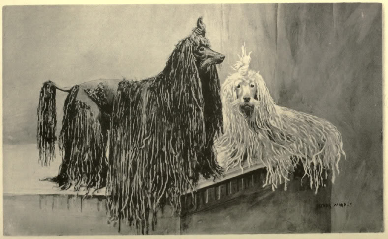 I love the mustaches on these Poodles!