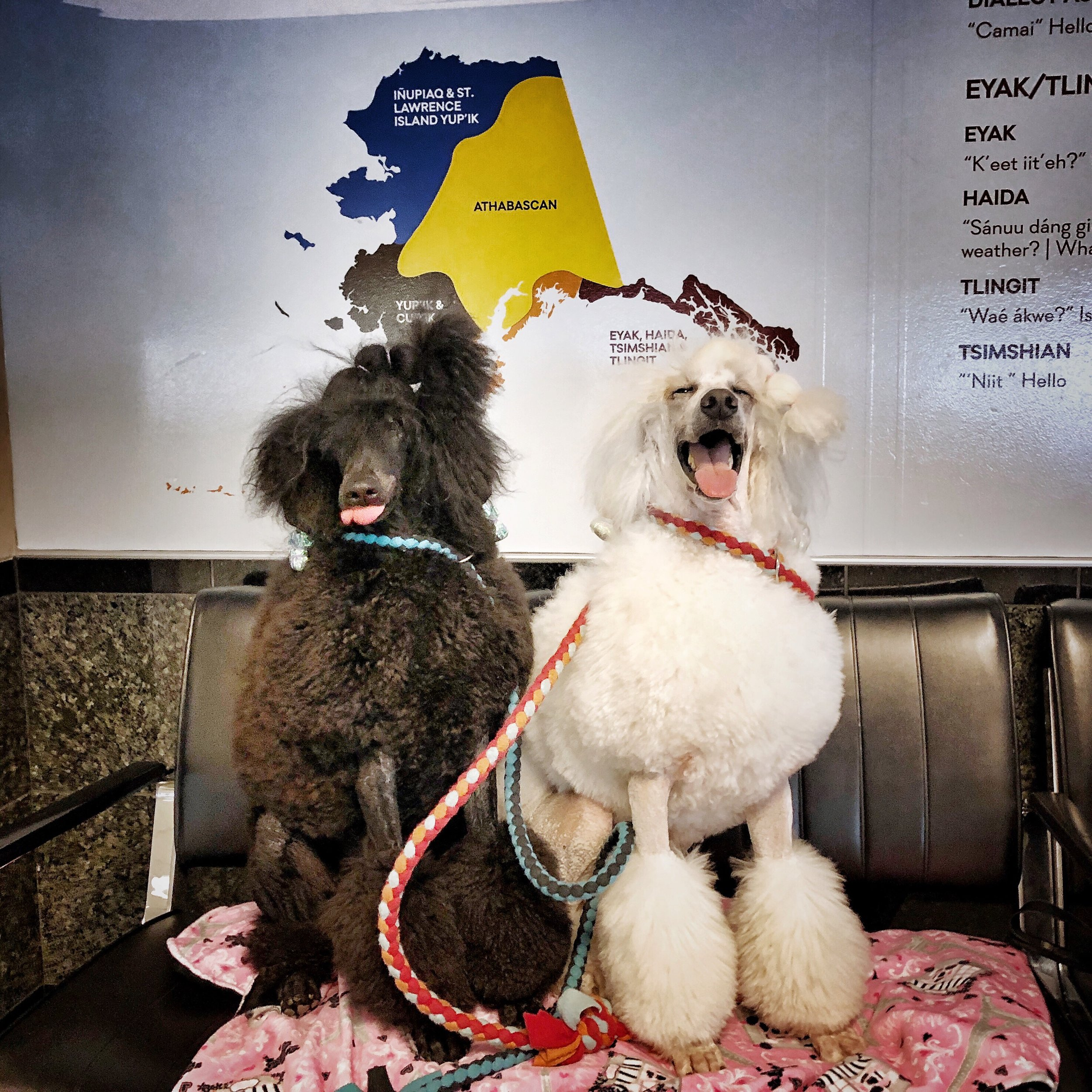 Kluane and Pali posing at the Ted Stevens International Airport in Alaska. We are home!!