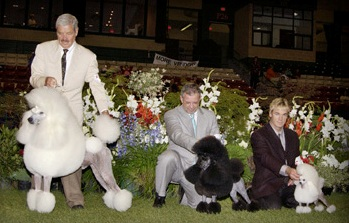 The winners from each size variety at the Poodle Club of America National in 2002. Fun Fact: Pali and Bryce are related to the Standard Poodle in this photo. Can you see a resemblance?