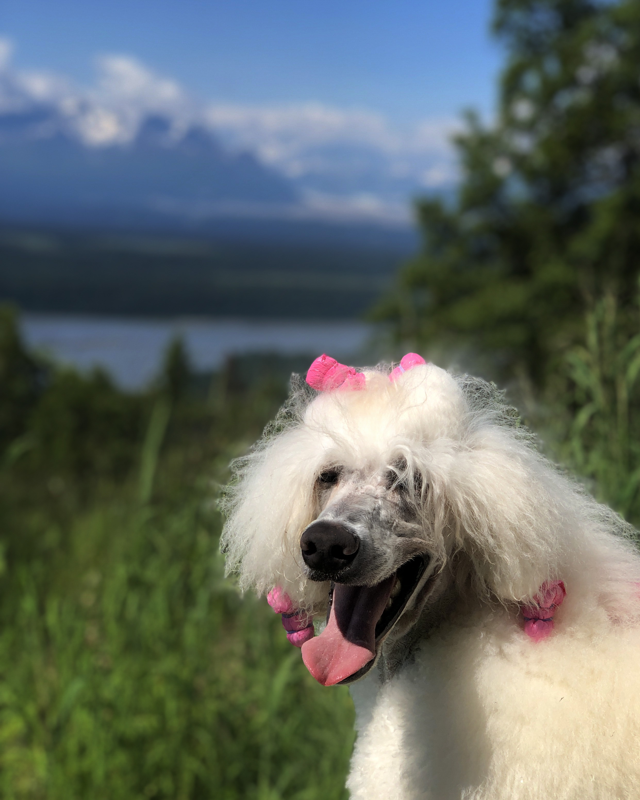 Pali loves to hik in the mountains.