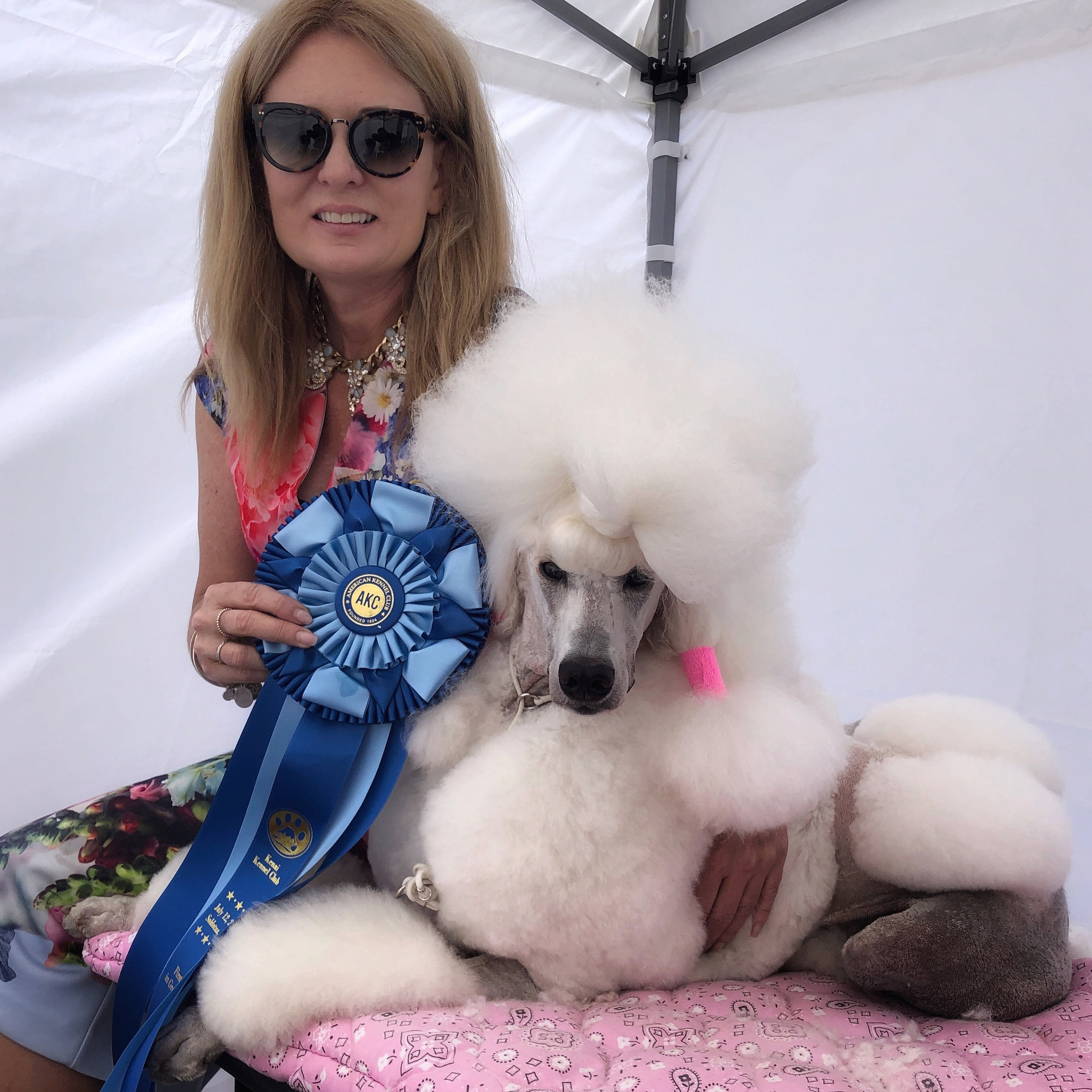 Poodle Pali won several Group One honors from the Non-Sporting Dog group at the dog shows this summer